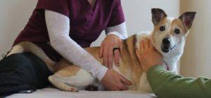 Osteopatija za životinje2
